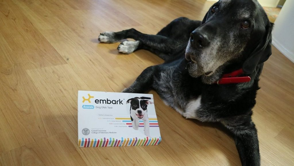 Embark dog DNA test review That Mutt