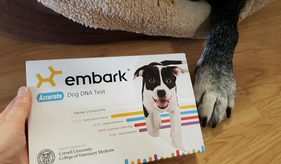 Embark mixed breed dog DNA test