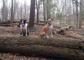 Finding Your Dog's Comfort Zone (and yours) for Off-Leash Hiking