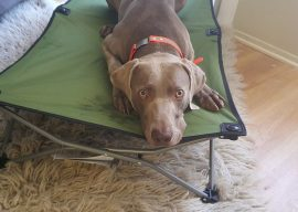 How to Teach Your Dog the Place Command – Portable Dog Beds