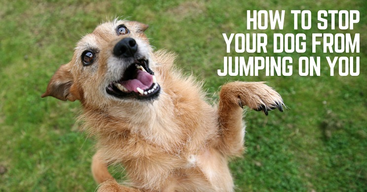 Stop your dog's jumping habit