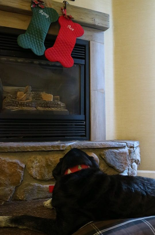 Ace and his dog bone Christmas stockings