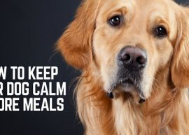 How to Keep Your Dog Calm Before Meals – 3 Commands