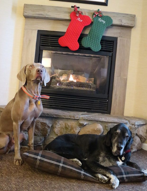 Dogs with their personalized dog Christmas stockings