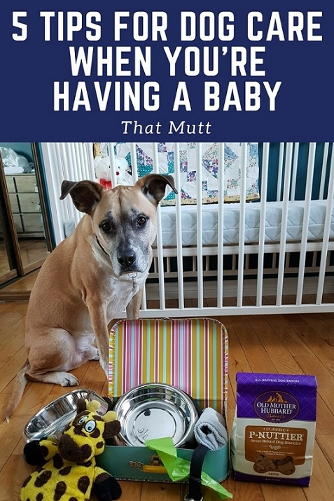 Care for your dog when you're having a baby