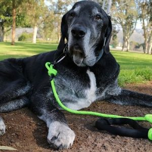 Mighty Paw Rope Leash Review