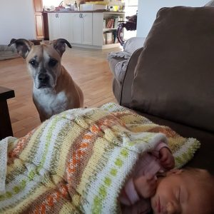 How to Create Safe Spaces for Your Baby and Your Dog