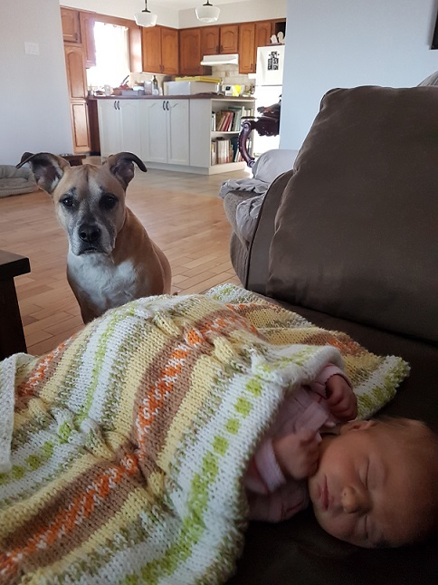 Planning the first greeting between your dog and baby