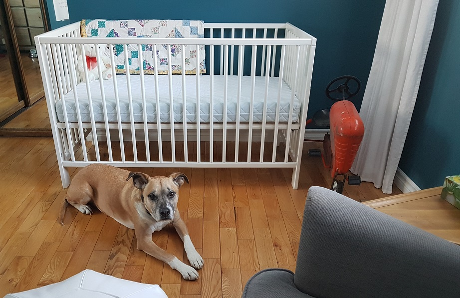 Baxter in the baby's room - safe spaces for your baby and your dog