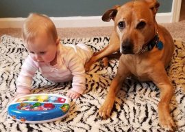 Preparing Your Dog for A Baby – Q&A with Maggie Marton from Oh My Dog Blog