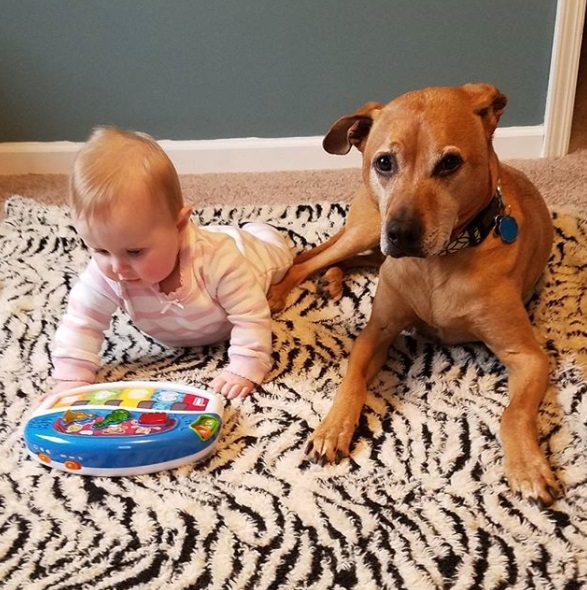 Preparing your dog for a baby