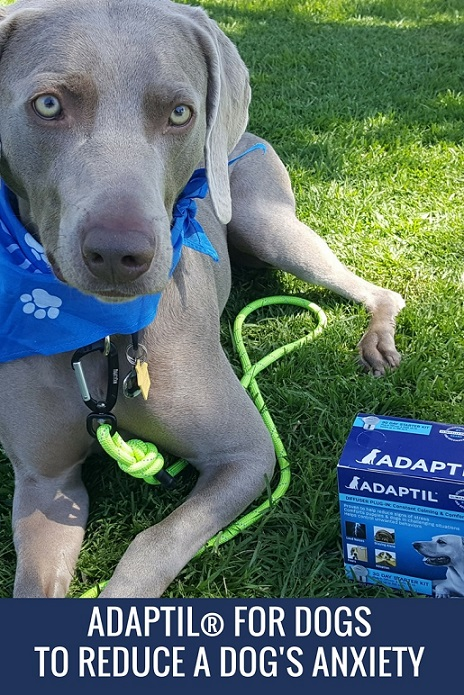 ADAPTIL for dogs - dog appeasing pheromones