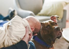 Preparing Your Pets for Your Baby – Q&A With Yellow Brick Home