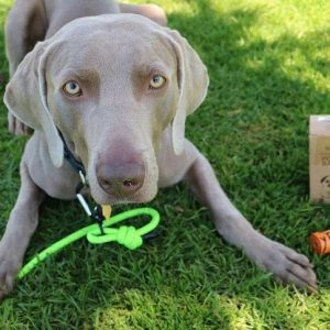 Earth Friendly Dog Poop Bags – Mighty Paw – 25% off