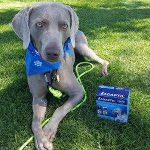 ADAPTIL® – Dog appeasing pheromones to reduce a dog's anxiety