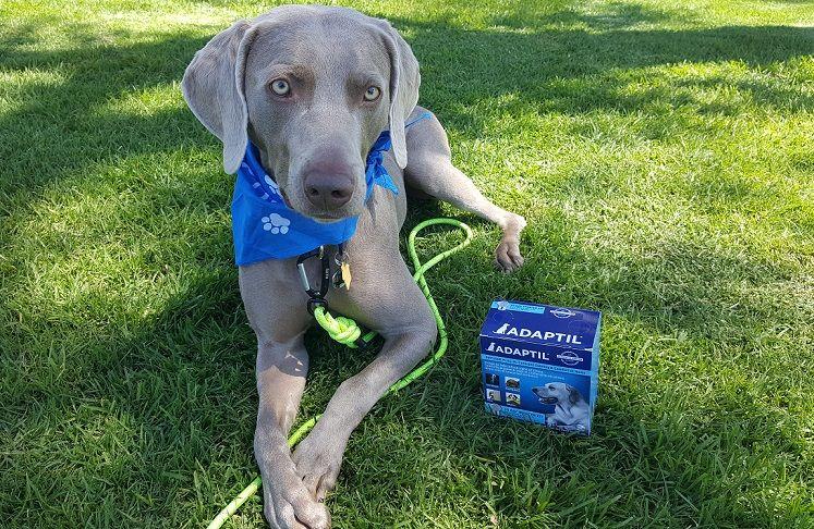 Adaptil for dogs - dog appeasing pheromones