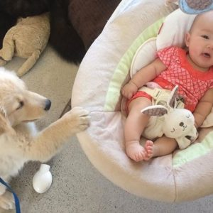 Puppy in Training – Preparing Your Dog for Baby