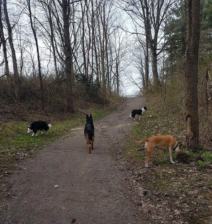 Baxter on a hike