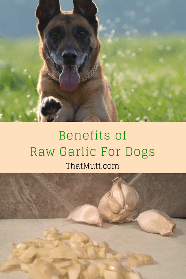 Benefits of raw garlic for dogs