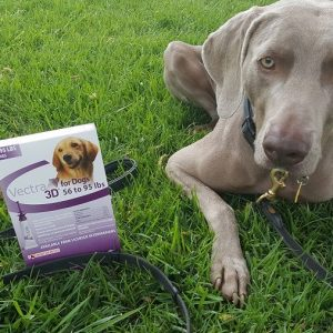 Vectra® 3D for dogs – monthly flea & tick prevention + giveaway