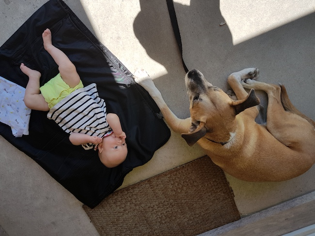 Resources on preparing your dog for a baby - baby Ellie and my dog Baxter