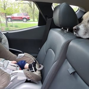 Car Rides With Your Dog And Baby – A New Routine