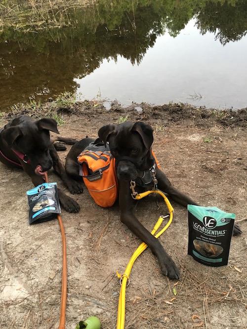 Missy & Buzz posing with VE Freeze-Dried Minnows & Wild Alaskan Salmon Rings
