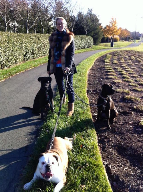 My sister walking Buzz, Missy and Ada