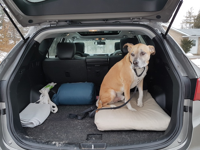 Preparing your dog for car rides with baby jpg