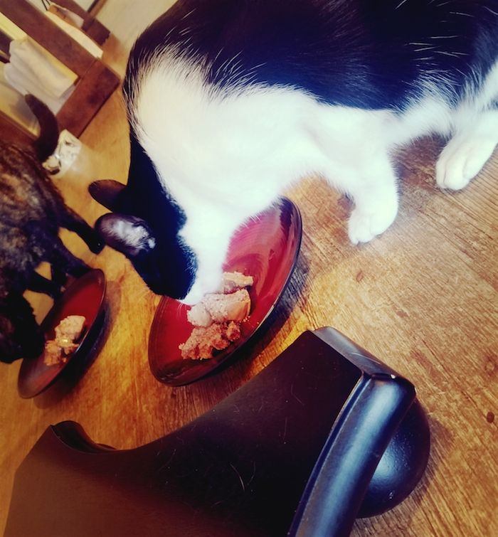 Which food is best for cats