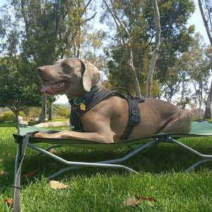 Carlson Portable Dog Cot – Dog Bed for Camping & Adventures