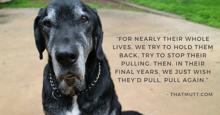 A quote with my black Lab mix Ace