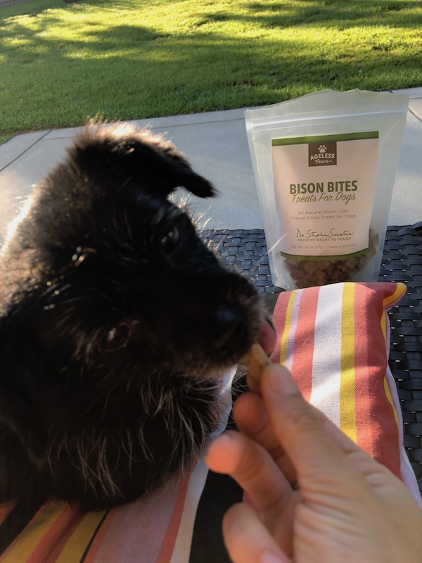 Sampling the bison liver treats