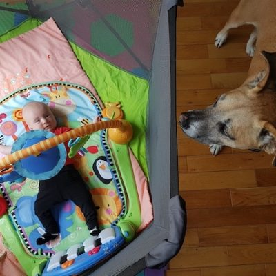 Our Top Gear Choices for Babies and Dogs!