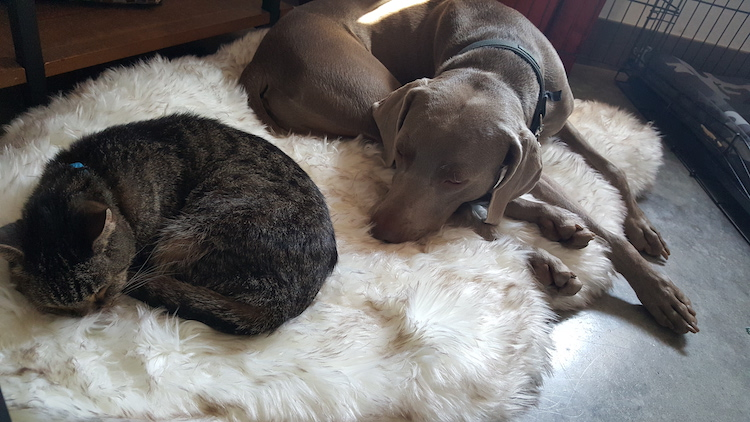My cat Scout and dog Remy