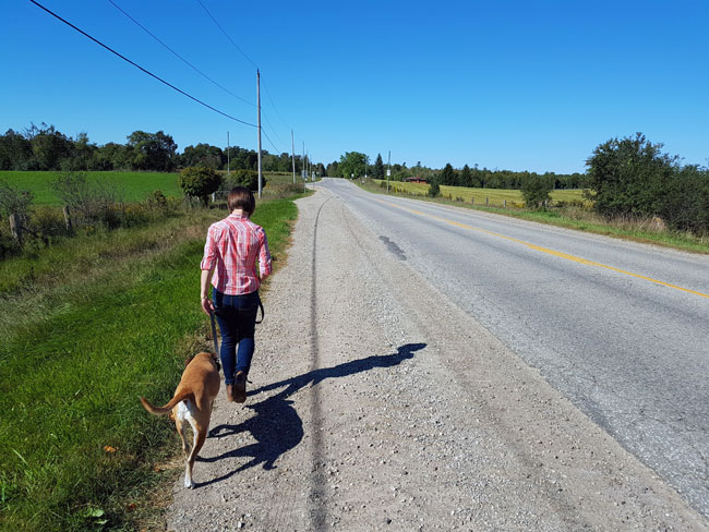 """Baxter in the """"over"""" position while walking on the road"""