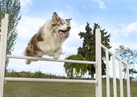 How Dog Agility Applies to All Dog Training – What We're Learning