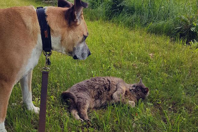 My dog Baxter and my barn cat Ralph