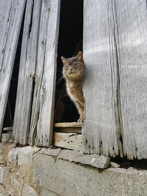 Ralph in the barn