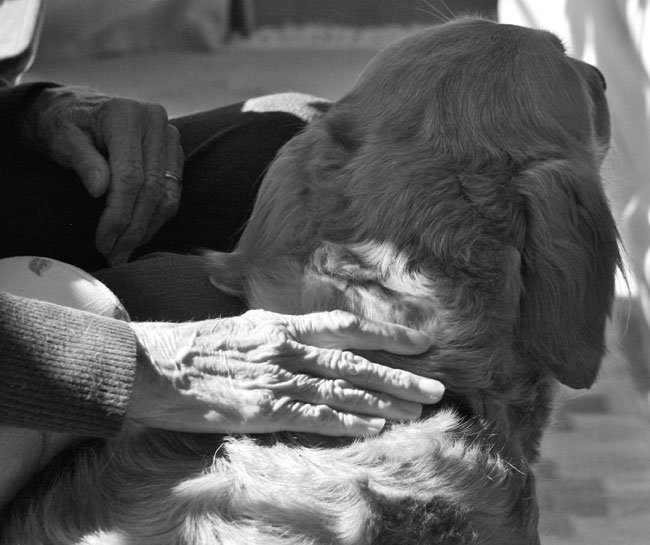 Senior citizen petting a dog through ELDERDOG