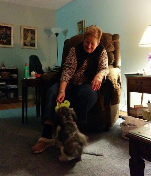 Helping seniors take care of their dogs through ELDERDOG