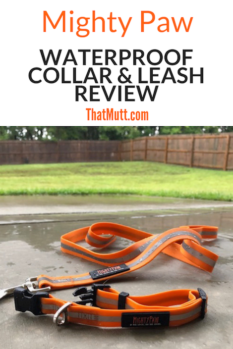 Mighty Paw waterproof collar and leash review