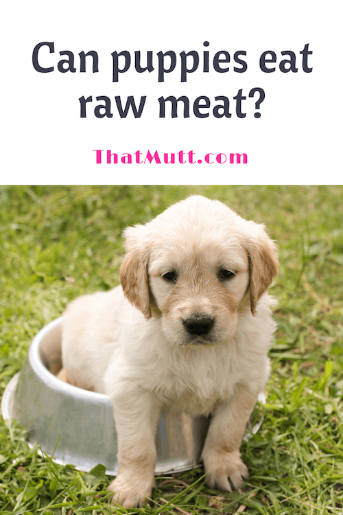 Raw food for puppies