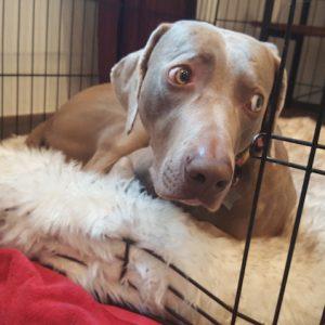 Three Reasons Why I'm Glad My Dog is Kennel Trained