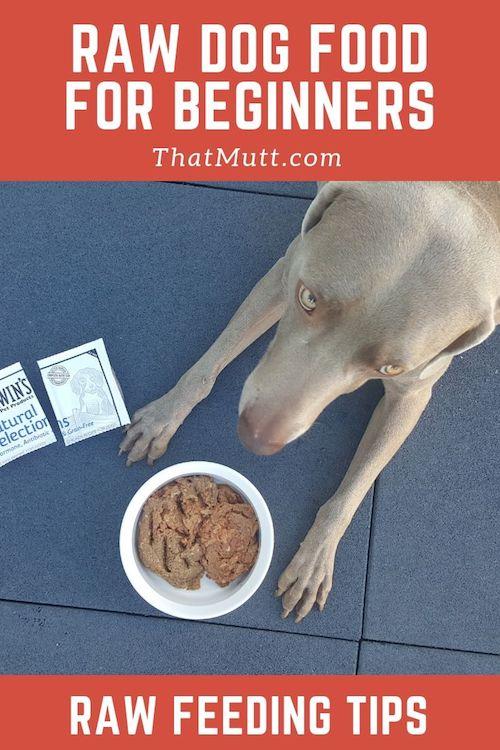 DIY raw feeding for beginners