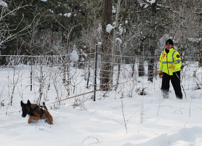 Susan Read and her Belgian Malinois search and rescue dog Zori search through snow