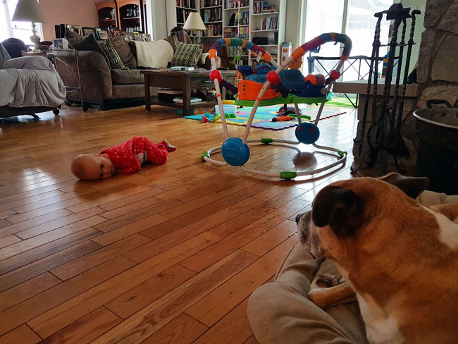 Baby laying on the floor staring a the dog