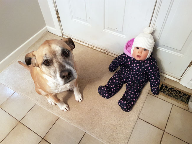 Dog and baby waiting to go for a walk