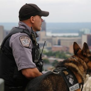 What Do Police Dogs Do?