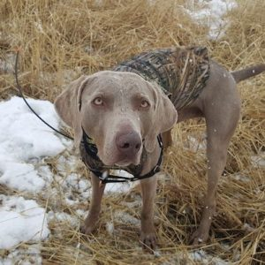 Garmin Alpha 100 Review – Best Dog GPS and E-Collar
